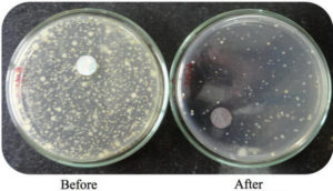 https://www.agnihotra.org/core/wp-content/uploads/2018/02/Bacteria-before-and-after-Agnihotra1-300x172.jpg